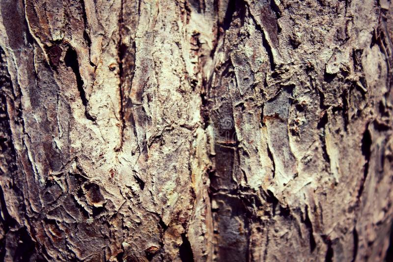 Τέχνη δέντρων στοκ φωτογραφίες με δικαίωμα ελεύθερης χρήσης