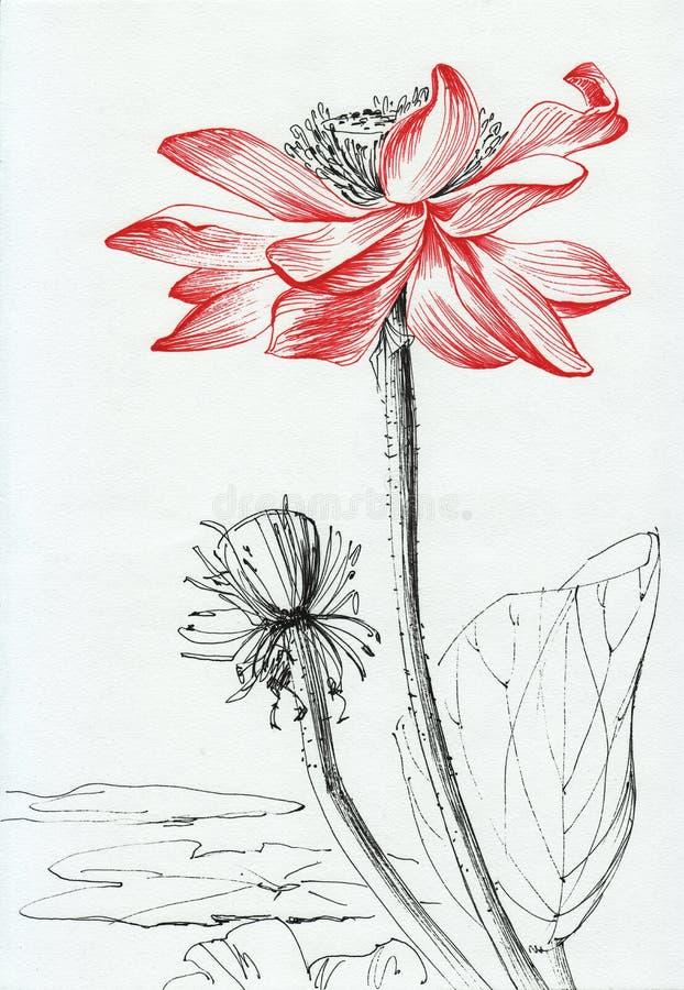 Τέχνη γραμμών λουλουδιών Lotus απεικόνιση αποθεμάτων