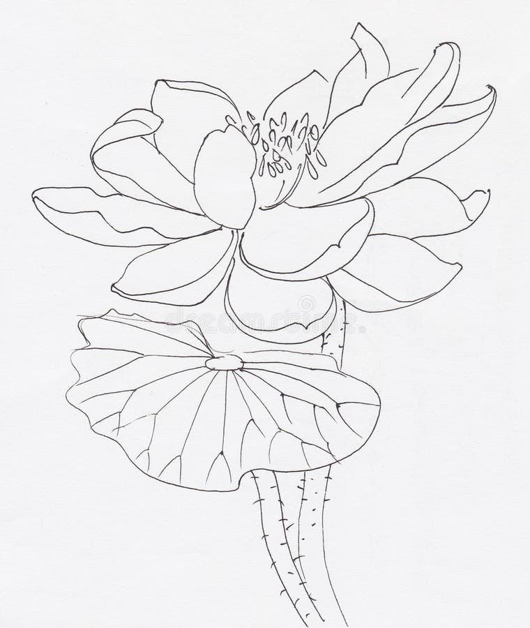 Τέχνη γραμμών λουλουδιών Lotus διανυσματική απεικόνιση