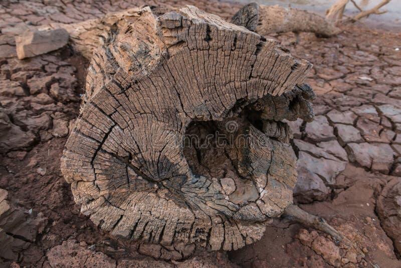 Τέχνη Driftwood στις φύσεις στοκ φωτογραφία με δικαίωμα ελεύθερης χρήσης