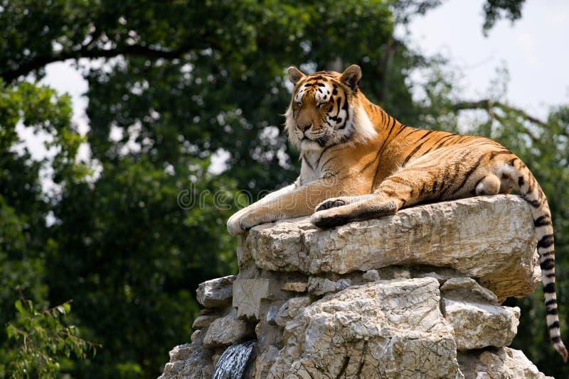 τίγρη βράχου στοκ φωτογραφία