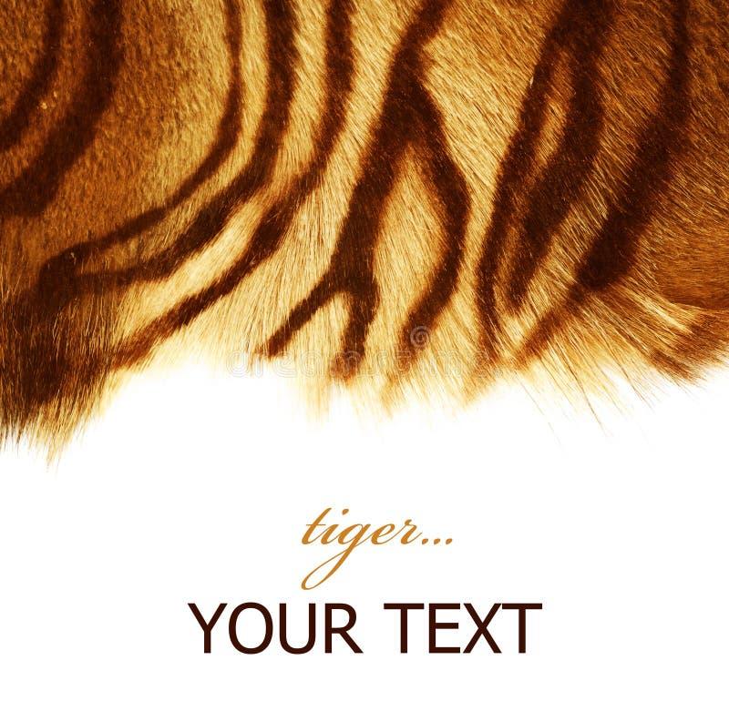 τίγρη γουνών στοκ φωτογραφία με δικαίωμα ελεύθερης χρήσης