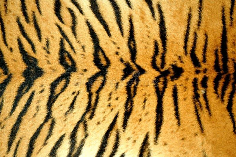τίγρη δερμάτων στοκ εικόνα με δικαίωμα ελεύθερης χρήσης