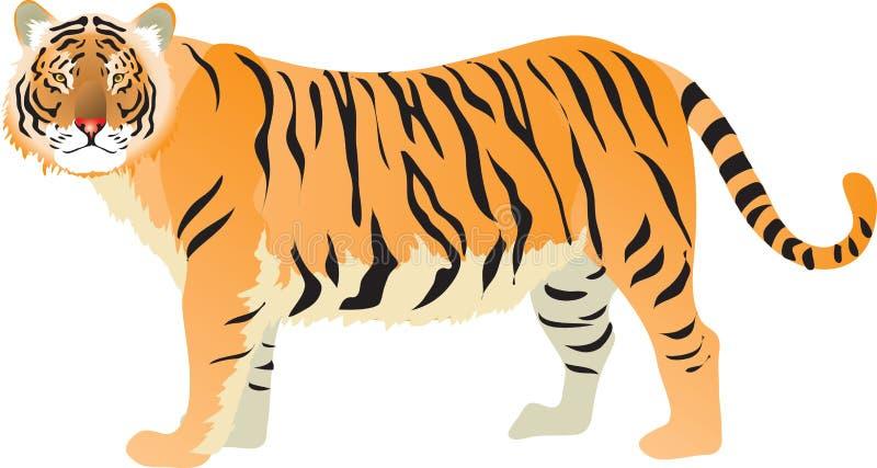 Τίγρη, μεγάλη γάτα από την ασιατική ζούγκλα - διανυσματική απεικόνιση απεικόνιση αποθεμάτων