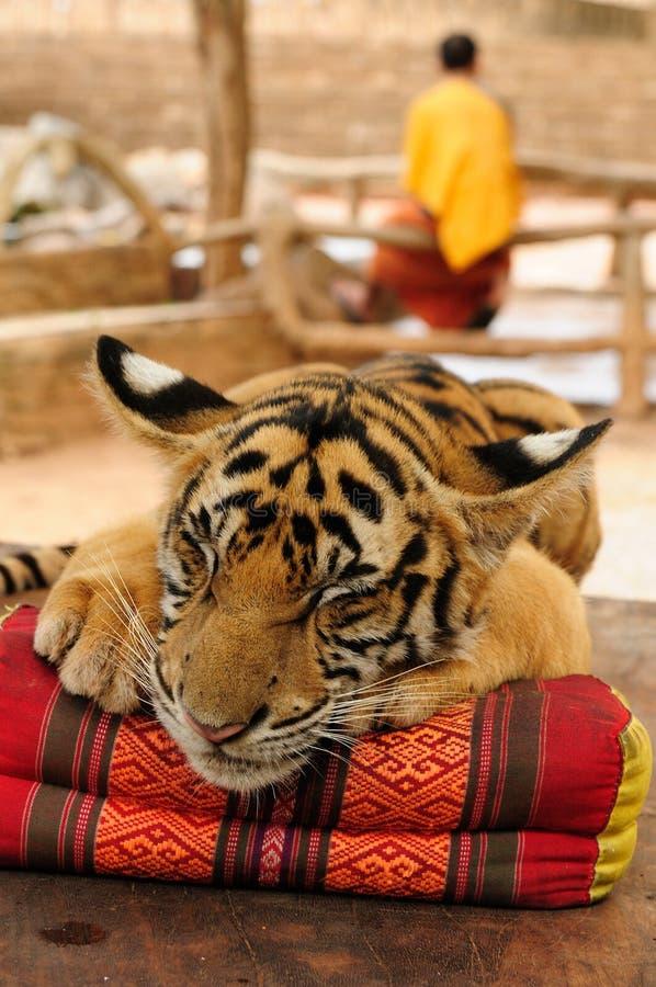 τίγρη ναών στοκ φωτογραφίες με δικαίωμα ελεύθερης χρήσης