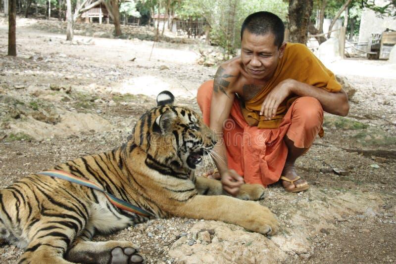 τίγρη ναών στοκ εικόνες με δικαίωμα ελεύθερης χρήσης