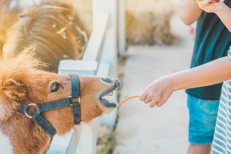Ταΐζοντας άλογο αγοριών στο αγρόκτημά του μέσω ενός άσπρου φράκτη στοκ εικόνα με δικαίωμα ελεύθερης χρήσης