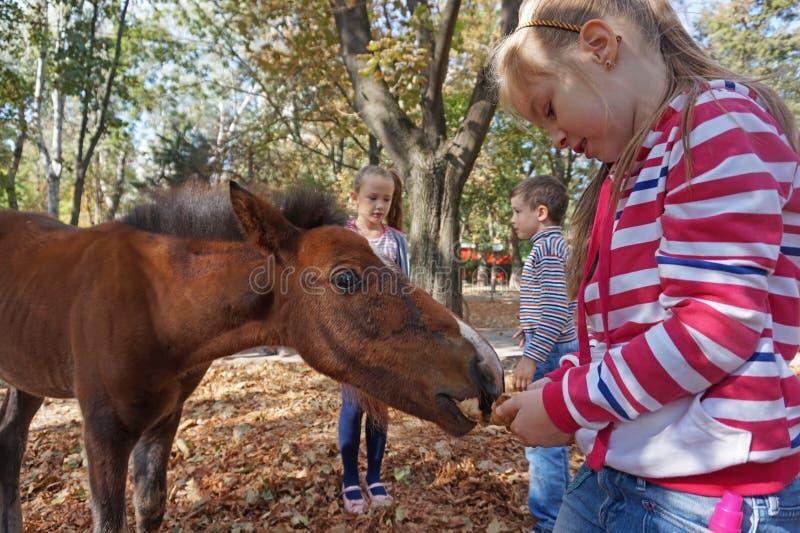 Ταΐζοντας άλογο παιδιών στοκ φωτογραφία με δικαίωμα ελεύθερης χρήσης