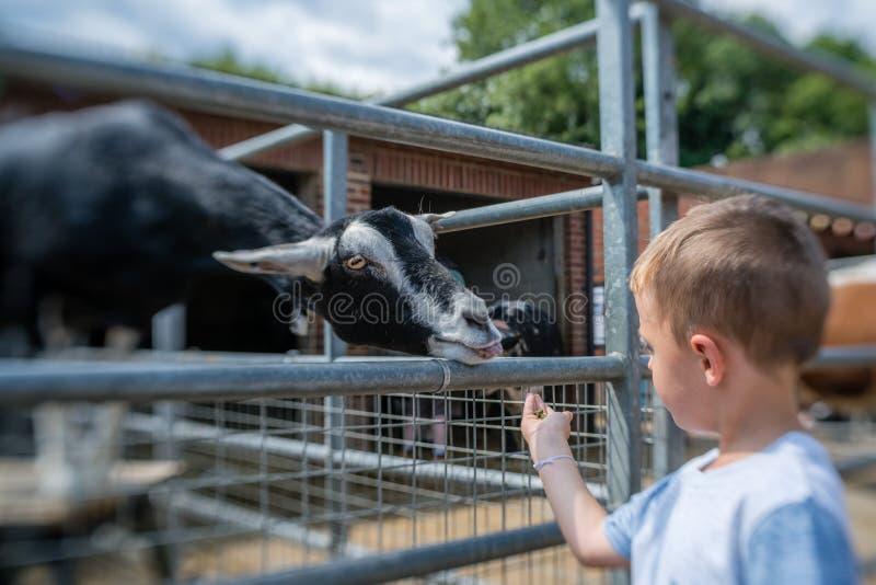 Ταΐζοντας αίγα αγοριών σε ένα αγρόκτημα στοκ φωτογραφίες με δικαίωμα ελεύθερης χρήσης