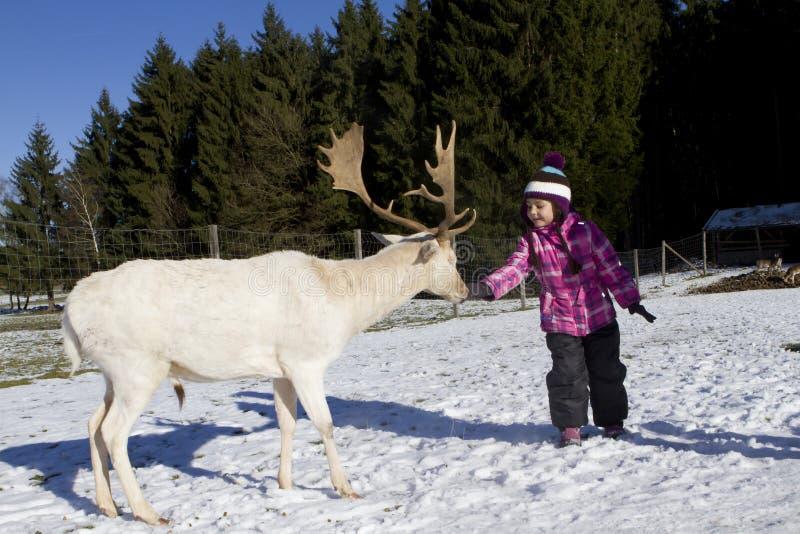 Ταΐζοντας ελάφια παιδιών το χειμώνα στοκ φωτογραφία