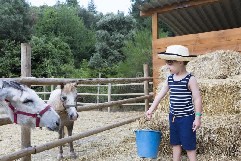 Ταΐζοντας ζώα αγροτικών αγοριών στοκ εικόνες