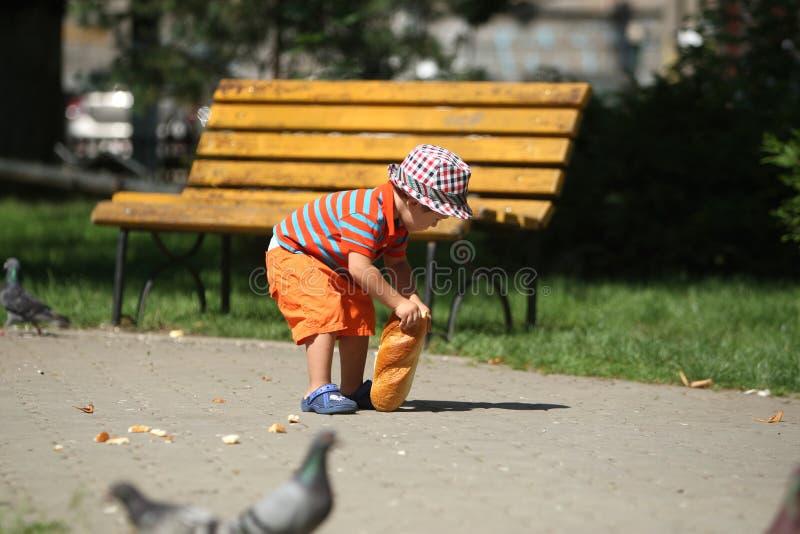 Ταΐζοντας περιστέρια αγοριών στοκ φωτογραφία
