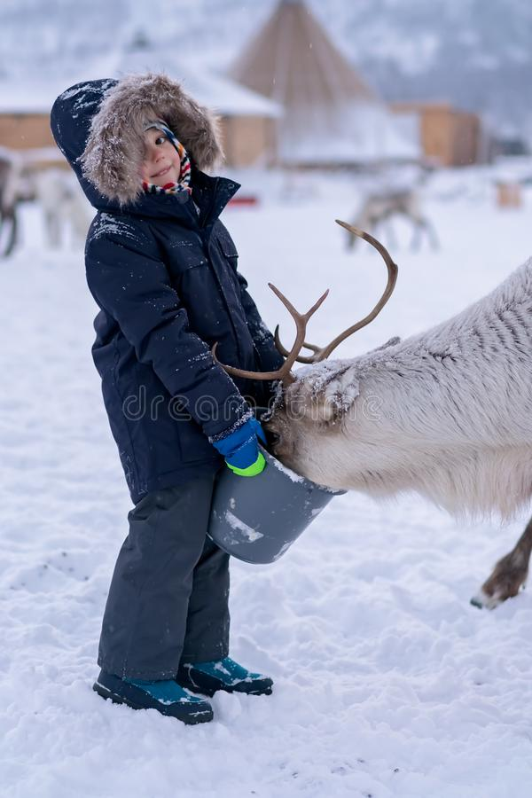 Ταΐζοντας τάρανδος αγοριών το χειμώνα στοκ εικόνες