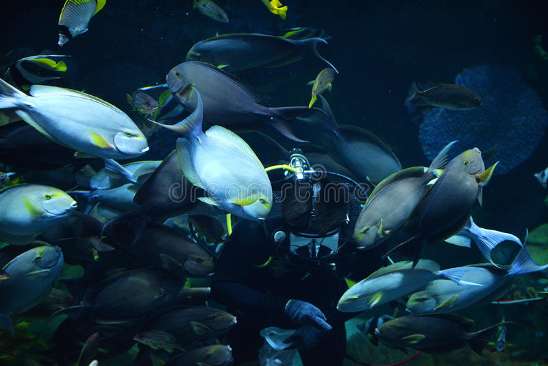 Ταΐζοντας ψάρια στη θάλασσα στοκ εικόνες