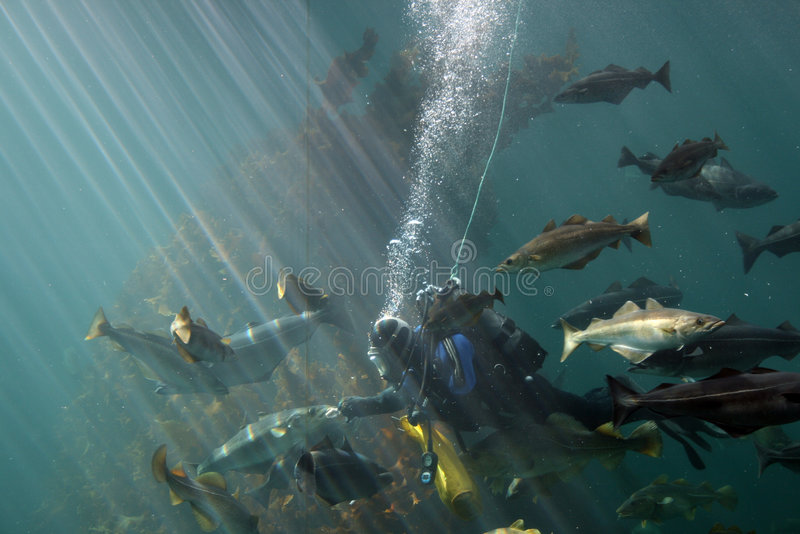 ταΐζοντας ψάρια στοκ εικόνες