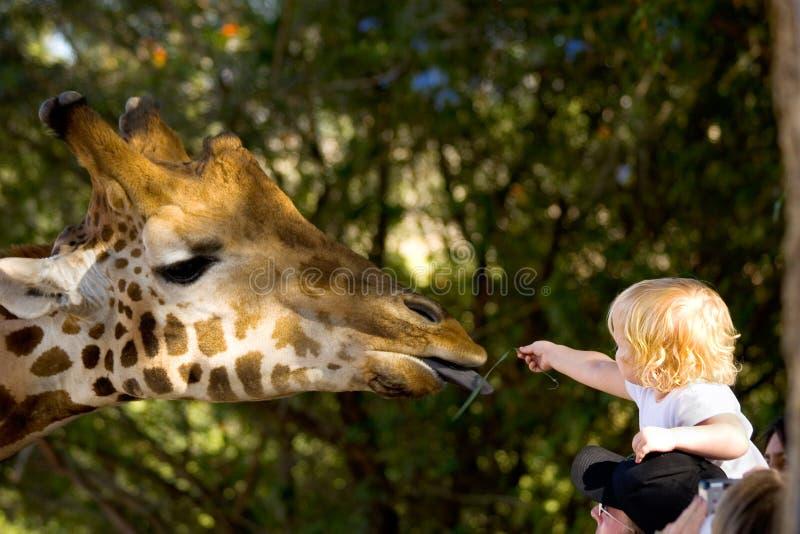 ταΐζοντας giraffe παιδιών στοκ φωτογραφία