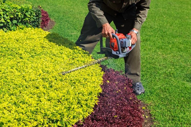 Τακτοποιώντας θάμνος κηπουρών με Trimmer φρακτών στοκ εικόνα