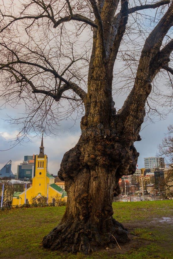 Ταλίν, Εσθονία: Εκκλησία του ST John του Ταλίν στο τετράγωνο ελευθερίας στην παλαιά πόλη στοκ φωτογραφίες με δικαίωμα ελεύθερης χρήσης