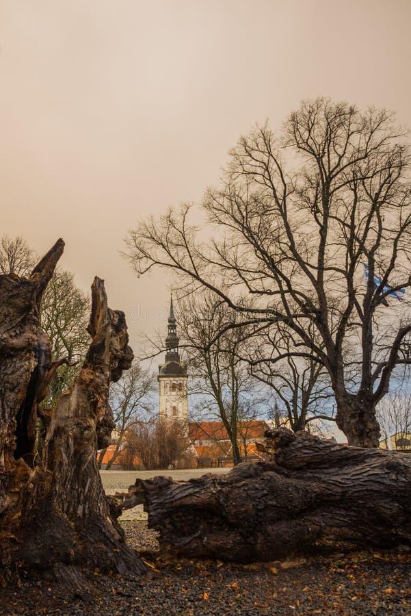 """ΤΑΛΙΝ, ΕΣΘΟΝΙΑ: Εκκλησία του Άγιου Βασίλη """", εκκλησία Niguliste, Niguliste kirik Παλαιό κολόβωμα δέντρων εμπλοκών, όμορφο τοπίο φ στοκ εικόνα με δικαίωμα ελεύθερης χρήσης"""
