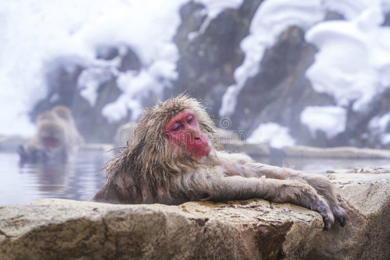 Ταξίδια στην Ασία Η κόκκινη μαϊμού μουδιάζει στο νερό για να χαλαρώσει το κρύο ευτυχισμένα Κατά τη διάρκεια του χειμώνα, βλέπετε  στοκ εικόνα με δικαίωμα ελεύθερης χρήσης