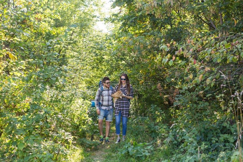 Ταξίδι, περιπέτειες, έννοια πεζοπορώ, τουρισμού και φύσης - ζεύγος τουριστών με τη γάτα που περπατά στα ξύλα στοκ φωτογραφίες με δικαίωμα ελεύθερης χρήσης