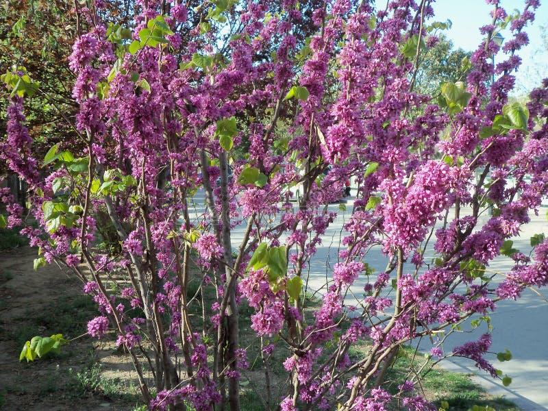 Ταξίδι στην Κίνα, το λουλούδι και τη μέλισσα στοκ εικόνες