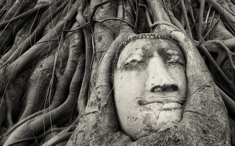 Ταξίδι στην Ταϊλάνδη, Ayutthaya Παλαιό γλυπτό πετρών του Βούδα δέντρων στοκ εικόνα με δικαίωμα ελεύθερης χρήσης