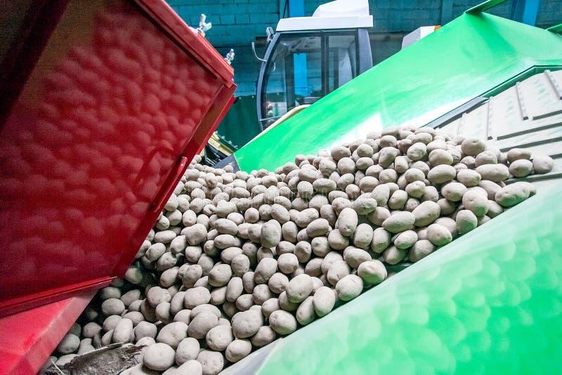 Ταξινόμηση πατατών, επεξεργασία και συσκευασία στο εργοστάσιο στοκ εικόνα