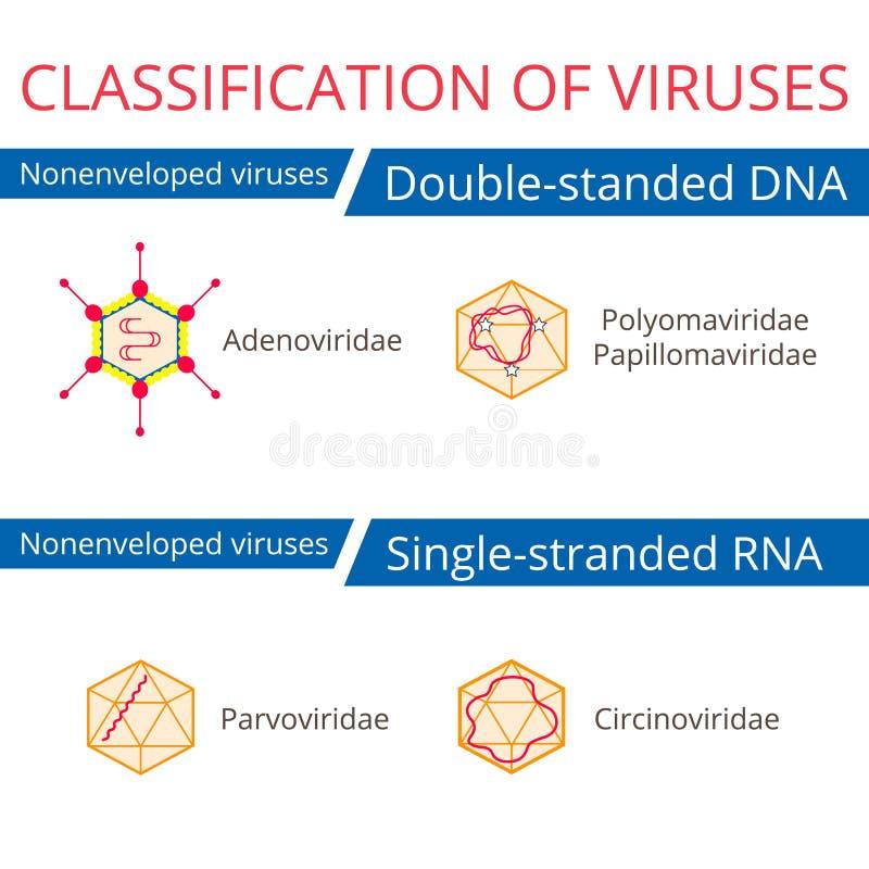 Ταξινόμηση των ιών Ιοί Nonenveloped διανυσματική απεικόνιση