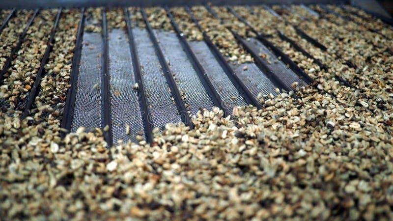 Ταξινόμηση φασολιών καφέ στοκ φωτογραφία