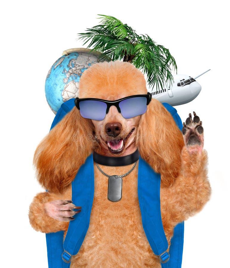 Ταξιδιώτης σκυλιών. Δημιουργικός. στοκ φωτογραφία με δικαίωμα ελεύθερης χρήσης