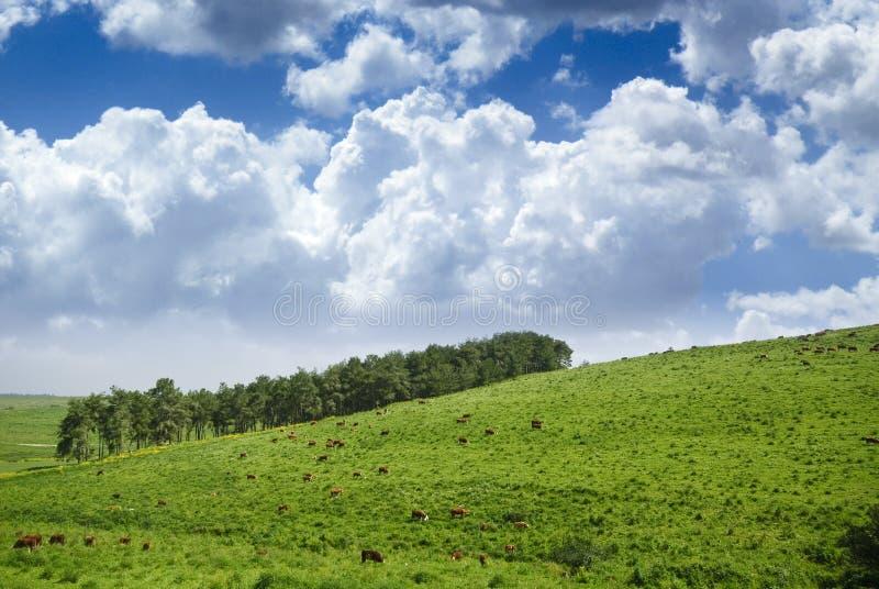 ταπετσαρία τοπίων στοκ φωτογραφίες