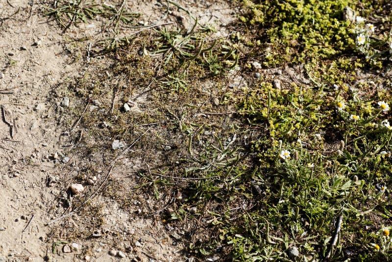 Ταπετσαρίες γήινου υποβάθρου υψηλές - ποιοτικές τυπωμένες ύλες στοκ φωτογραφίες με δικαίωμα ελεύθερης χρήσης