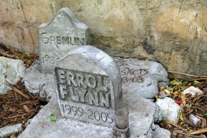 Ταφόπετρα νεκροταφείων της Pet στοκ εικόνα