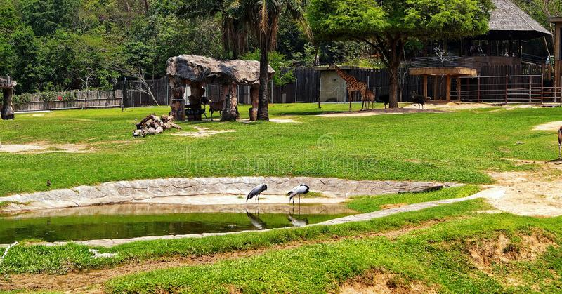 Ταϊλάνδη, Pattaya, ζωολογικός κήπος Khao Kheo, φύση, Ασία, γερανοί, giraffes, λίμνη, πέτρες στοκ φωτογραφίες