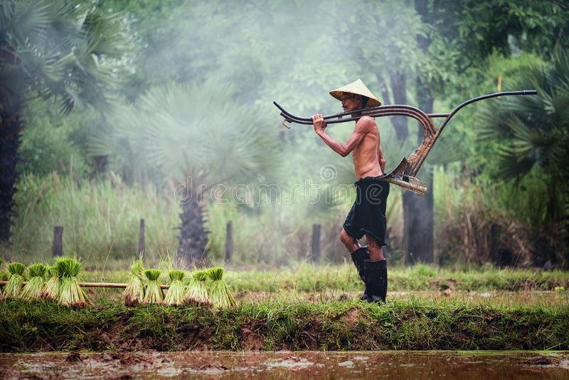 Ταϊλανδικές εργασίες αγροτών στον τομέα ρυζιού, αγροτική επαρχία της Ταϊλάνδης στοκ φωτογραφίες