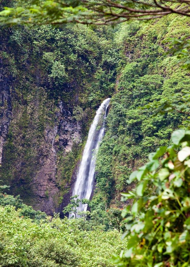 Ταϊτή φύση τροπική στοκ φωτογραφίες