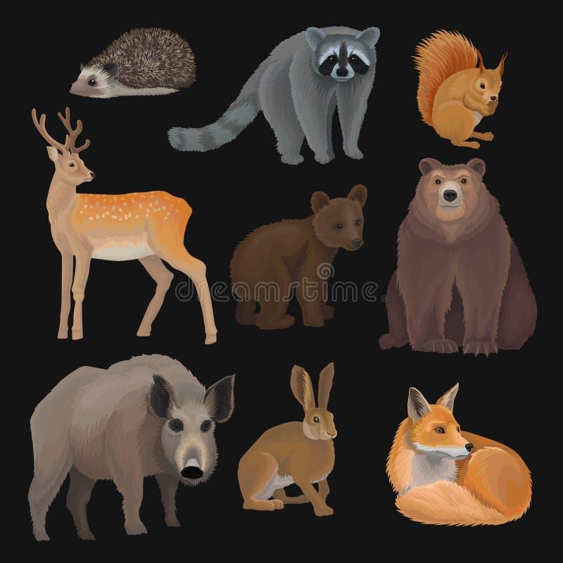 Τα άγρια βόρεια δασικά ζώα καθορισμένα, σκαντζόχοιρος, ρακούν, σκίουρος, ελάφια, αλεπού, αντέχουν cub, άγριος κάπρος, διανυσματικ απεικόνιση αποθεμάτων