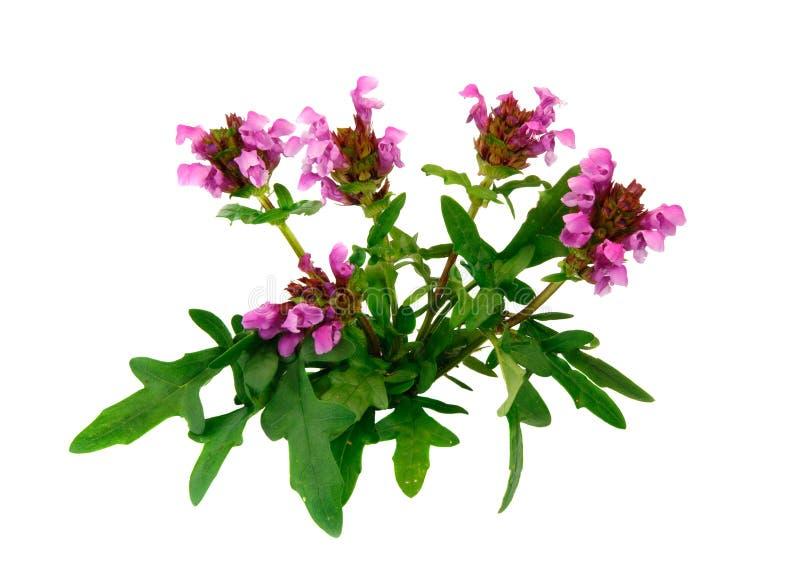τα άνθη θεραπεύουν μόνο στοκ εικόνες