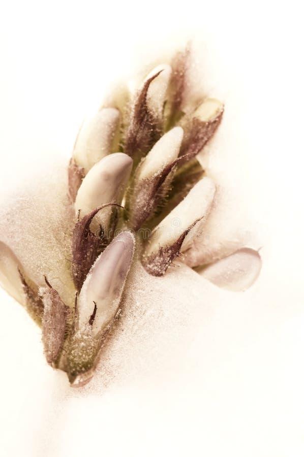 τα άνθη κυβίζουν παγωμένο &ta στοκ φωτογραφία με δικαίωμα ελεύθερης χρήσης