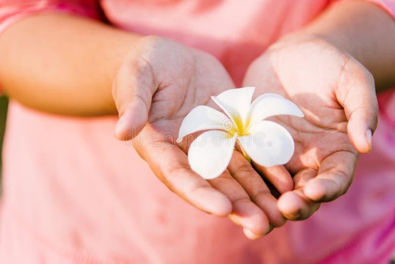 Τα άσπρα λουλούδια στα καρδιά-διαμορφωμένα χέρια έχουν ένα ρόδινο υπόβαθρο στοκ εικόνες με δικαίωμα ελεύθερης χρήσης