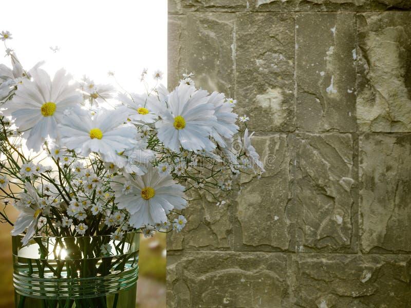 Τα άσπρα λουλούδια με τον παλαιό μαρμάρινο τοίχο και το ηλιοβασίλεμα κλείνουν επάνω τη φωτογραφία στοκ εικόνες