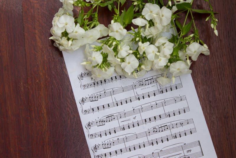 Τα άσπρα λουλούδια phlox στη μουσική σημειώνουν το φύλλο Ξύλινος πίνακας Τοπ όψη στοκ εικόνες με δικαίωμα ελεύθερης χρήσης