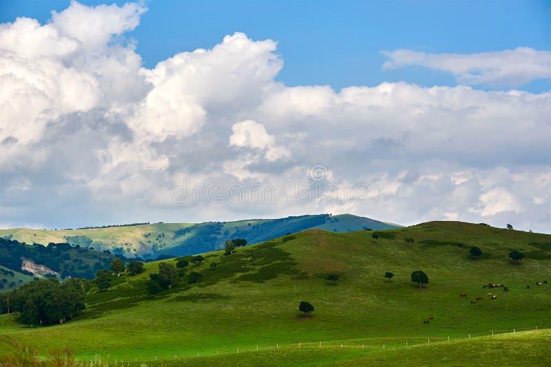 Τα άσπρα σύννεφα και το πράσινο λιβάδι στοκ φωτογραφία με δικαίωμα ελεύθερης χρήσης