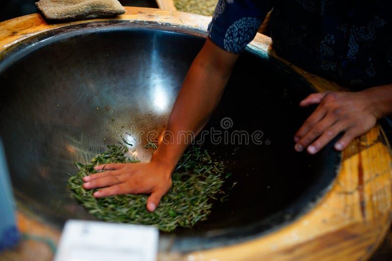 Τα άτομα καθορίζουν τα φύλλα τσαγιού στοκ εικόνα