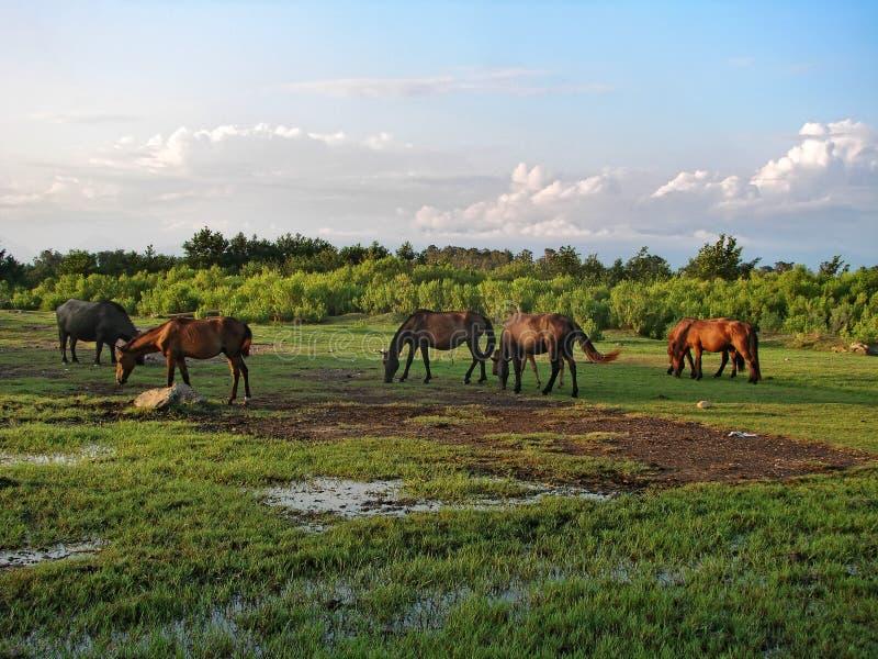 Τα άλογα είναι βοημένα σε ένα λιβάδι κάτω από το μπλε ουρανό με τα σύννεφα στοκ φωτογραφίες