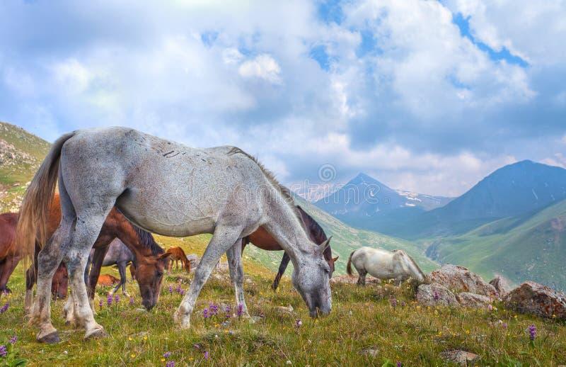 Τα άλογα στα βουνά στο Θιβέτ στοκ φωτογραφία με δικαίωμα ελεύθερης χρήσης