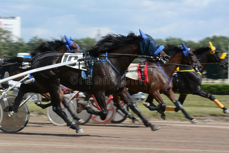 Τα άλογα trotter αναπαράγουν στην αφηρημένη θαμπάδα κινήσεων στοκ εικόνες