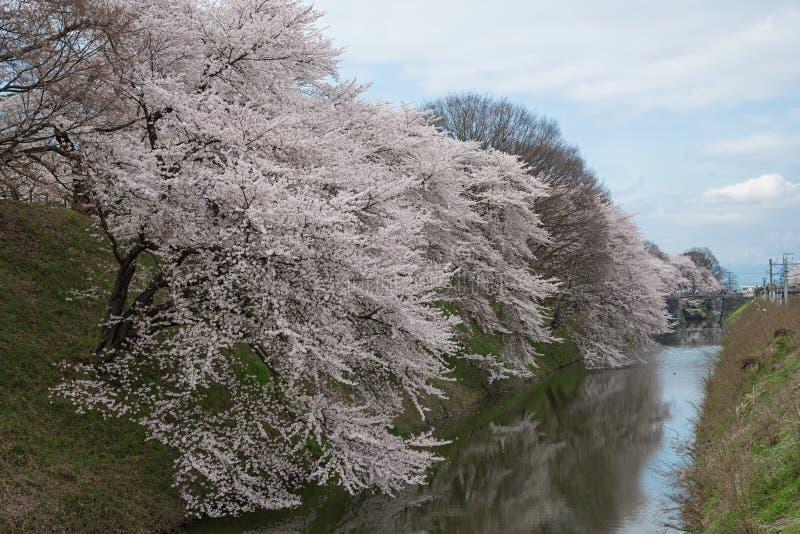Τα δέντρα κεράσι-ανθών πλήρους άνθισης κατά μήκος των τάφρων κάστρων Kajo στοκ εικόνες
