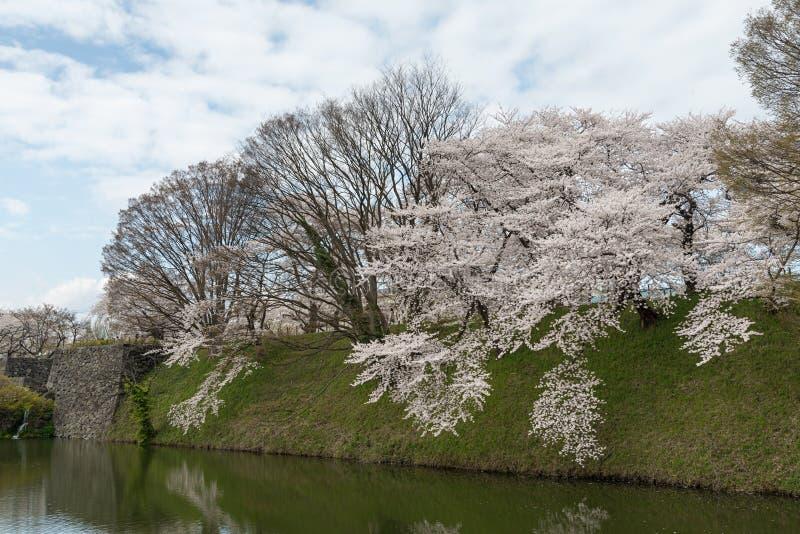 Τα δέντρα κεράσι-ανθών πλήρους άνθισης κατά μήκος των τάφρων κάστρων Kajo στοκ εικόνα